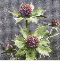 HC498 - Mini Sea Holly by John Clayton - Mini Flowers